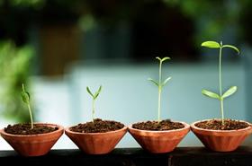 植物がないと人は生きられない